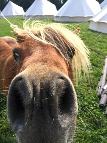 Nosey Pony