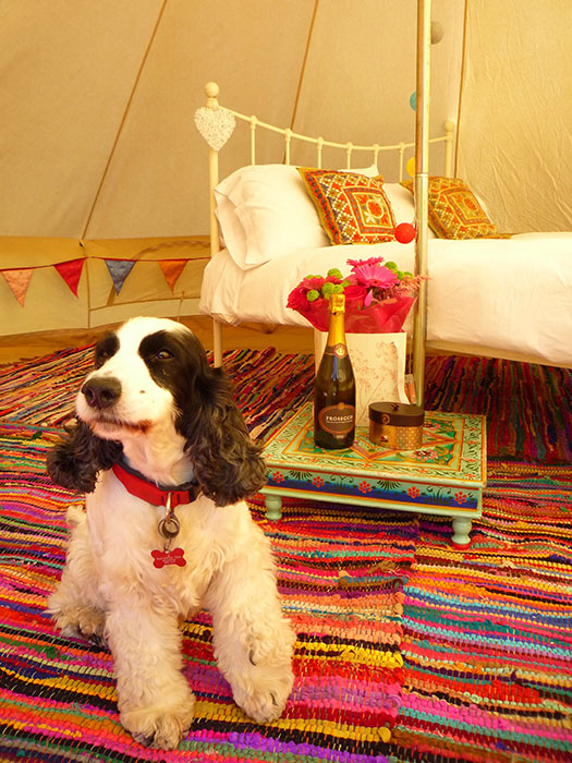 oneymoon Suite with Maisy the Loveabell dog